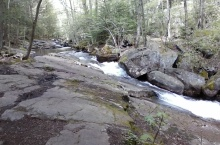 On the Blue Trail, away from the Tubs. Soooo beautifula nd peaceful. Hermit Thrush seen here . . . yeah, not in the photo.