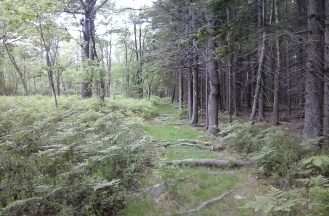 Pine plantation on the right