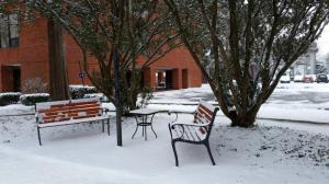 Ross Library Benches in Snow